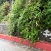 LA_143 - Sunset Plaza Hills - Los Angeles /// 30 pts